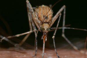 Schutz vor Insektenstichen